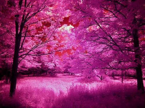 park usa landscape spring connecticut infrared middletown middletownnaturegarden 06457 johnjmurphyiii
