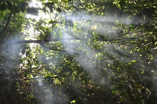 Shisha smoke sun beams 2
