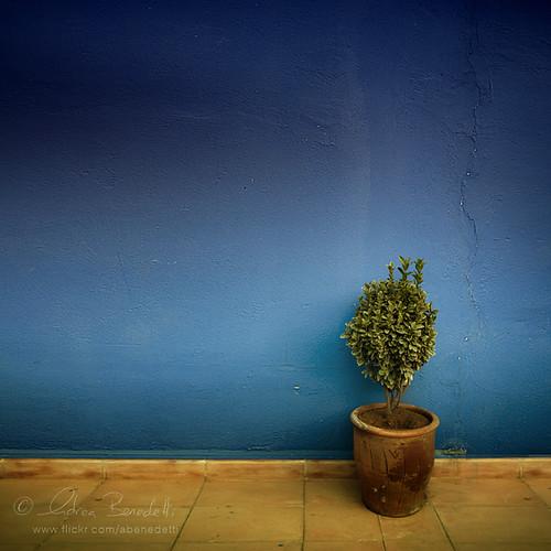 blue light plant muro texture andy wall landscape bush blu andrea andrew morocco marocco marrakech marrakesh minimalismo minimalist luce paesaggio pianta benedetti siepe nikond90 minimanlism ąиđч