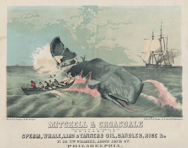 Modern sperm whale hunting