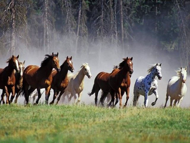 Beautiful horses, light as the wind !!!