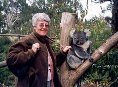 mammal, koala, fauna, safari,
