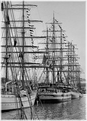 sailing ship, vehicle, east indiaman, ship, windjammer, training ship, full-rigged ship, fluyt, mast, monochrome photography, frigate, barquentine, clipper, tall ship, watercraft, black-and-white, flagship, barque, brig, brigantine,