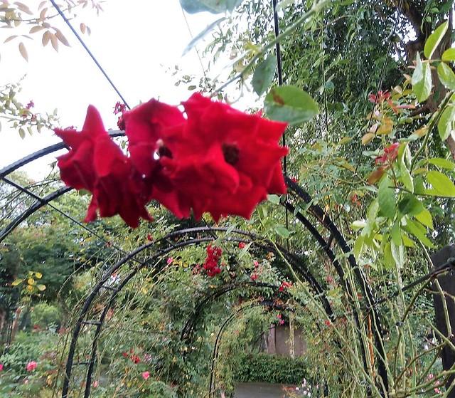 雅聞的花 (5)