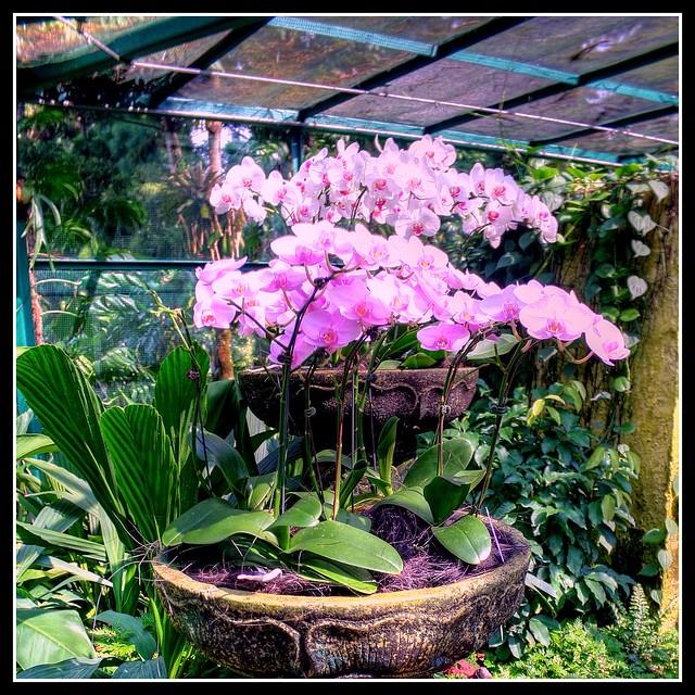 Stunning Orchid Garden Designs 500 x 500 · 258 kB · jpeg