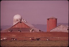 Dairy Farm on the Banks of the Columbia River in Clark County 05/1973