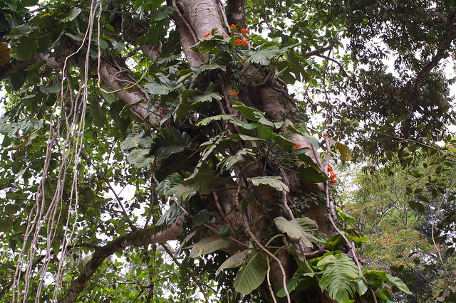 Spice Garden in Kerala
