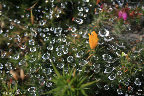 Raindrops and Webs