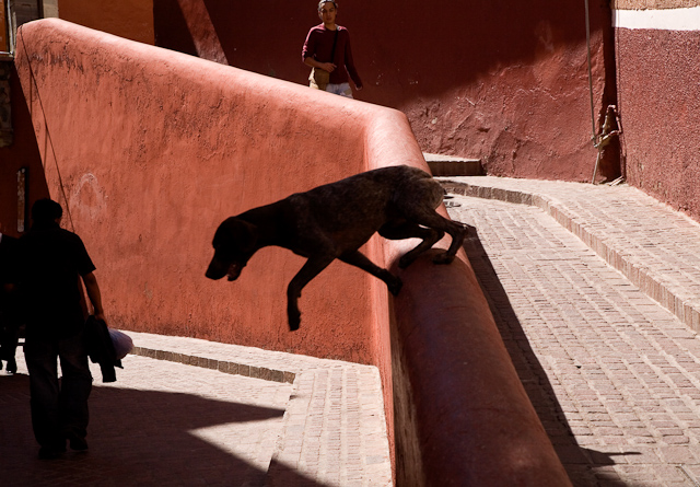 The little dog laughed - 35 Fantastic Color Street Photographs