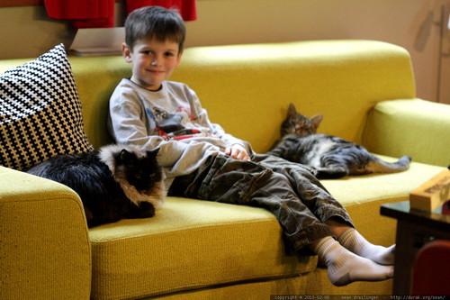 nick, peacemaker between warring cats