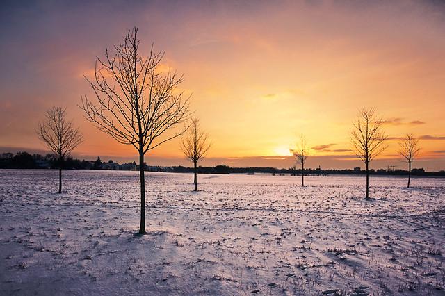 tree(s) & snow 3