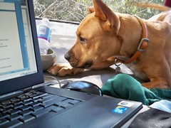 Dog vs. Computer by Lorri Momiji on Flickr Creative Commons