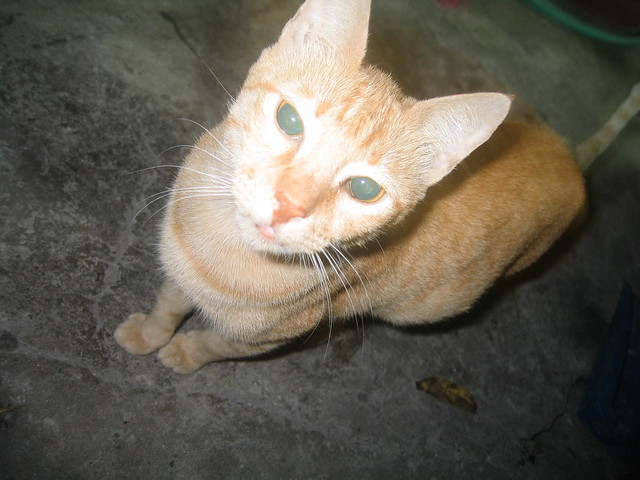 cat philippines Browse 731 results on olx philippines brand new and used cats for sale.