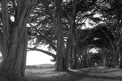 Tree Tunnel 2