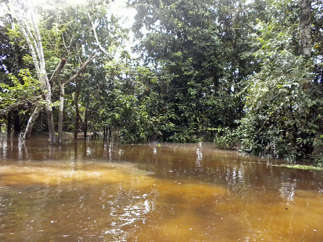 Ucayali RiverUcayali River