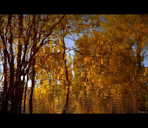 Golden wake...!!!