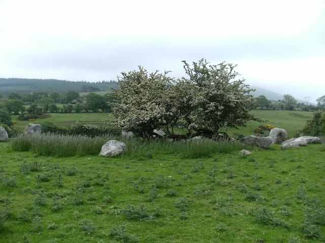 White Thorn Tree In Stone Circle Flickr Photo Sharing