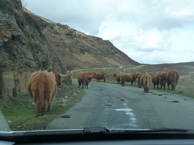 Elgol traffic jam, Panasonic DMC-TZ8