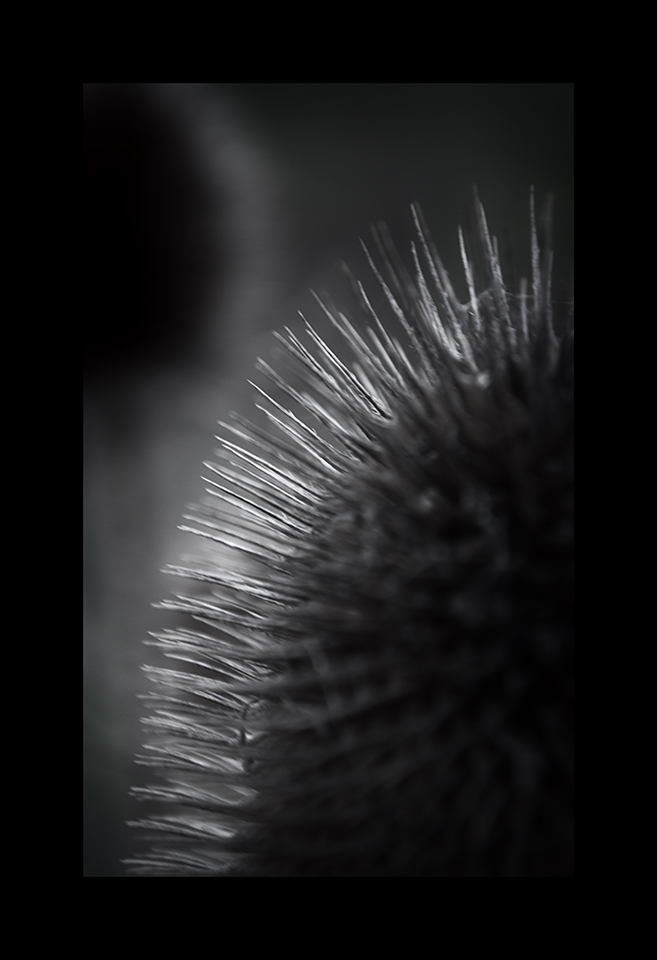 Photography: Spines by Nicholas M Vivian