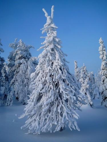 Perfecto árbol de navidad