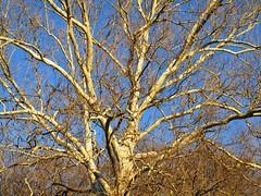 Winter tree beauty