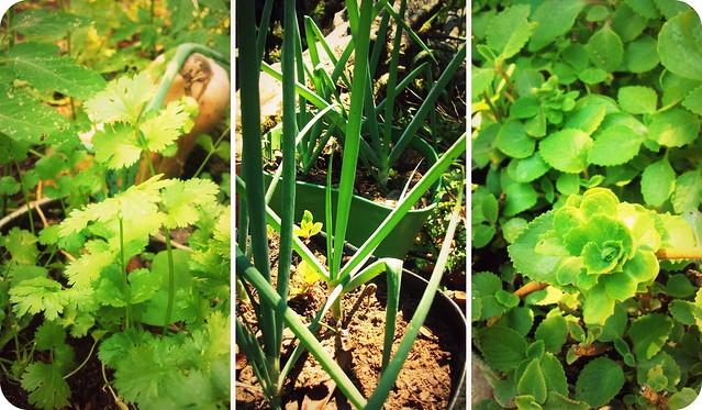 5 plantas aromaticas yahoo dating