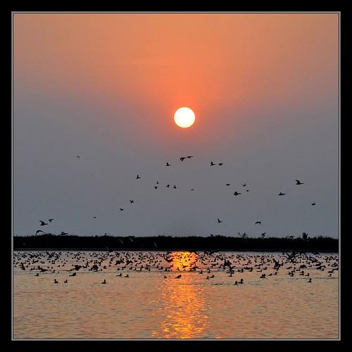 sunset nature birds bangladesh tangua waterbasin migratorybirds sytoha syedtouhidhassan tanguarhaor ramsarsiteinbangladesh
