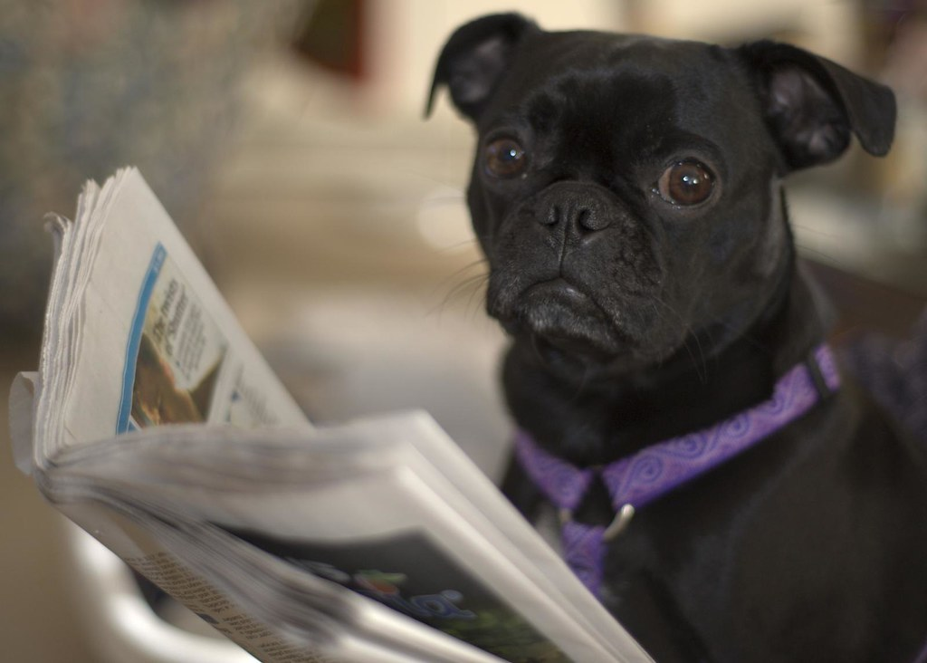 Dog Reads Newspaper?