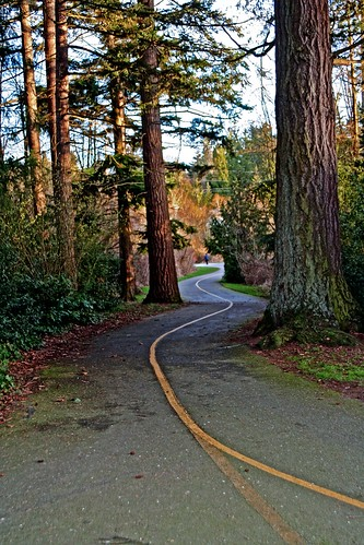 trees digital canon wonder photography washington northwest path south trail imaging winding interurban lynnwood canonrebelxt hdr starlight snohomishcounty starlite photomatix