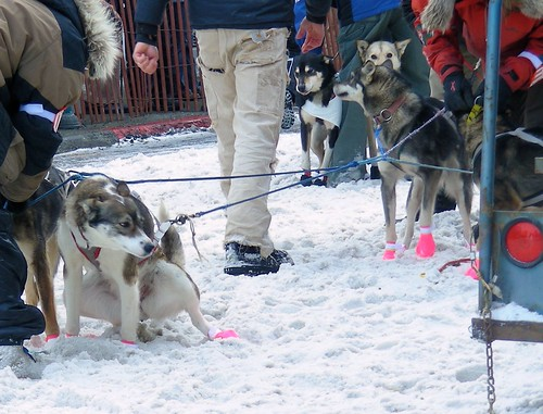 4413402780 2ea828a5e8 Iditarod 2010 ceremonial start