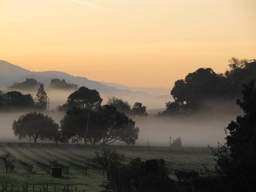 Napa Valley - Sunrise on the Silverado Trail
