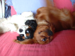 <p>Rocco and Roma check out life from a different perspective</p>