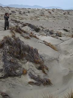 Stewart island sand dunes