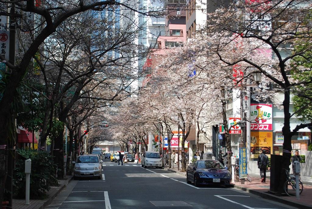 八重洲櫻花道