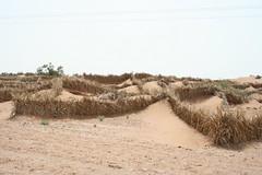 Roadside Desertification Management