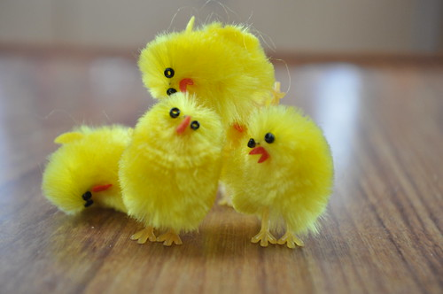 Easter Chicks on a Boat