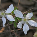 Southern Dewberry - Photo (c) Jerry Oldenettel, some rights reserved (CC BY-NC-SA)