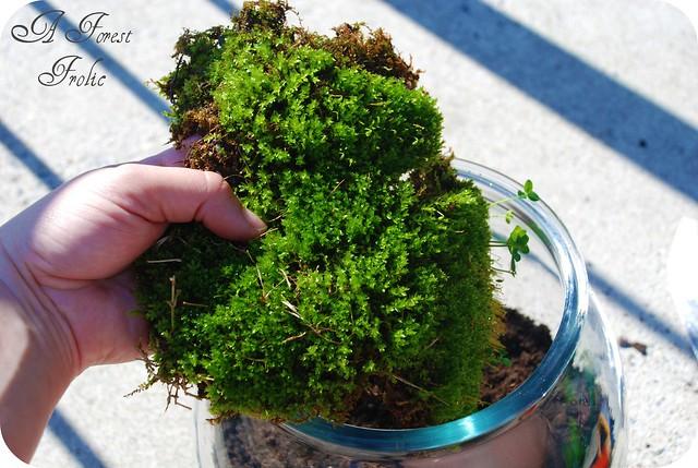 Moss terrarium 4