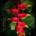 Robert's garden, Costa Rica (12)
