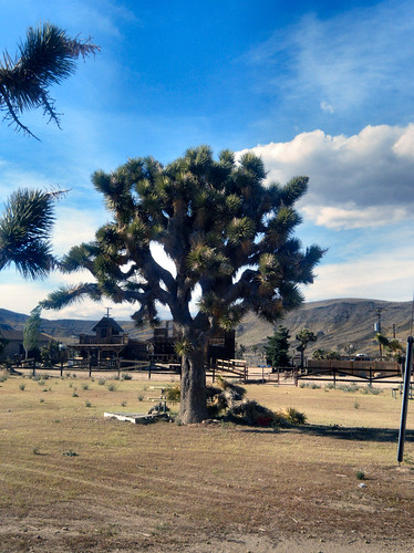 Joshua Tree in Pioneertown