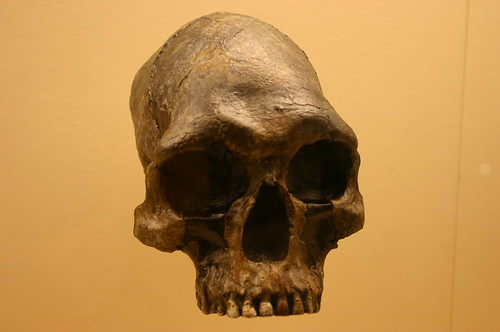 Homo Sapiens 13,000 to 9,000 Years Old