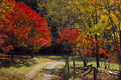 color fall nature leaves tom landscape virginia nikon october outdoor rugby grayson va 2010 graysoncounty d40