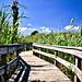 Sunken Forest, Fire Island National Seashore by Six Sigma Man (2.800.000 views)