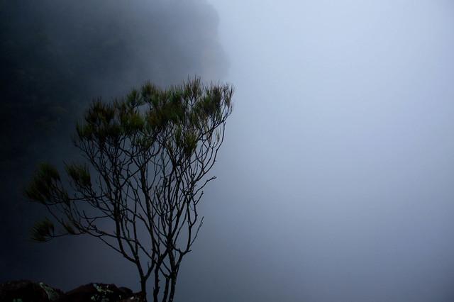 Eery Tree