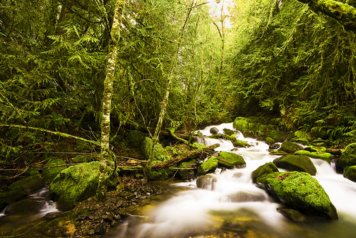 longexposure trees winter cold tree green water rock oregon creek forest canon river eos moss stream falls pacificnorthwest 40d kylekruchokphotography