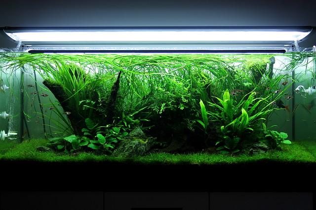 My 240l Nature Aquarium Flickr - Photo Sharing!