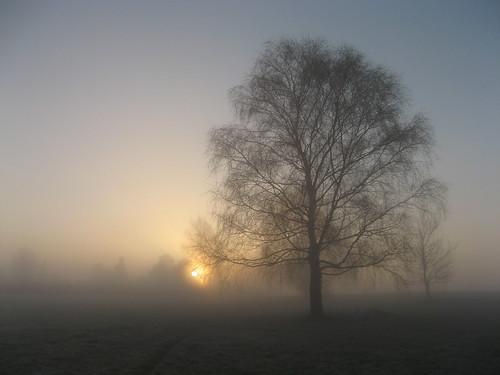 morning friends mist tree misty fog sunrise denmark march coth anawesomeshot explorewinnersoftheworld 100commentgroup virtualjourney saariysqualitypictures coth5