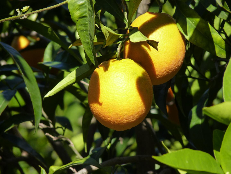 2 Naranjas