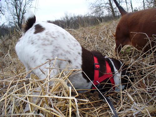 2010-03-26 - Ralphie & O-Ren - 0011