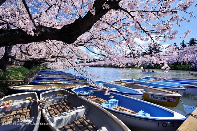 Sakura Boats (Hirosaki Japan). © Glenn Waters.. Over  20,000 visits to this photo.   Thank you.
